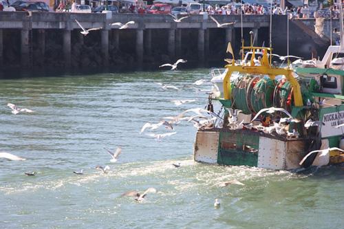 Bateau de pêche de en mer des sables d'olonne